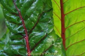 Winter Vegetable Garden Southern California Garden Greens U0026 Smoothies Kailyard U0027n U0027kitchen