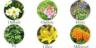 common house and garden plants that are toxic to your dogs and cats
