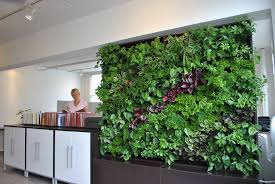 more plants in the office can improve aesthetics air quality and