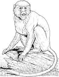 monkey printout enchantedlearningcom roloway monkey coloring page