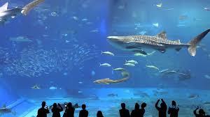 aquarium 2 hrs aquarium relax music youtube