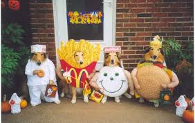 Ewok Dog Halloween Costume Favorite Dog Halloween Costumes K9 Carfence