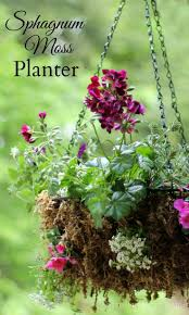 Outdoor Wall Hanging Planters by 291 Best Leaves Flowers And Garden Images On Pinterest