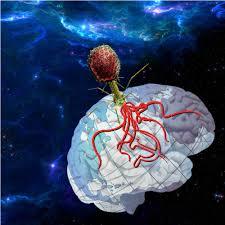 Virus Of The Mind The New Science Of The Meme - global mind virus steemit