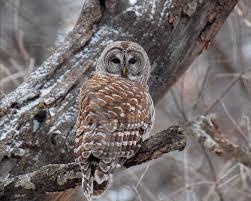 leigh richards owl tree
