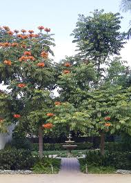 trees form arch entrance mediterranean landscape santa