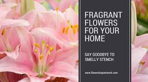 fragrant flowers the best fragrant flowers for your home