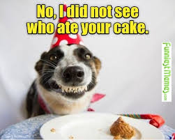 Birthday Cake Meme - funny pictures no i did not see who ate your cake birthdays
