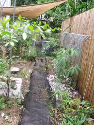 self sustaining garden africanaussie self sustaining garden producing my own mulch