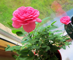 tips for indoor gardening no place