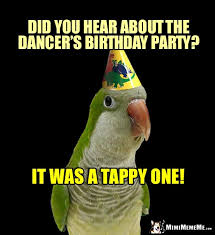 Parrot Meme - happy birthday greetings from parrots cheep bird day humor funny b