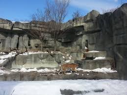 brookfield zoo winter lights more zoo s brookfield zoo english gone wayward