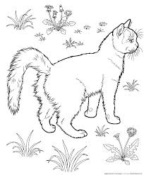 cats coloring pages tonkinese cats kids printables coloring pages