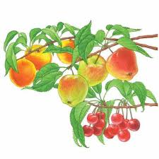 Best Fruit Trees For North Carolina - all about growing fruit trees organic gardening mother earth news