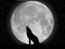halloween wolf background wolf wallpapers 1920 1200 wolf wallpaper 39 wallpapers
