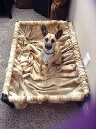 Pvc Pipe Dog Bed Build A Dog Cot For Around 10 Pvc Pipe Dog Beds And Pipes