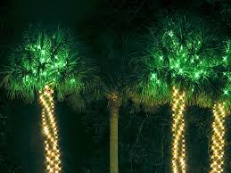 palm tree lights pictures images and stock photos istock
