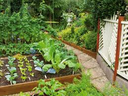 rooftop vegetable gardens photo video and photos garden trends