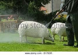 concrete sheep at mezieres sur issoire haute vienne stock