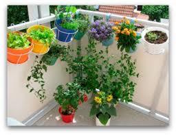 Patio Vegetable Garden Ideas Container Vegetable Gardening 10 Pictures Of Vegetable Gardening