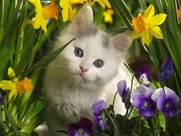 Beautiful Images Funny U0026 Cute Cats Beautiful Cats Hd Wallpapers