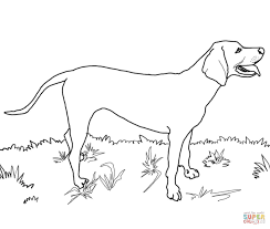 redbone coonhound coloring free printable coloring pages
