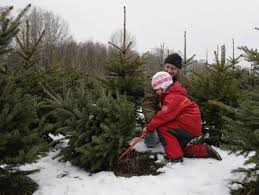 best places to buy trees cbs pittsburgh