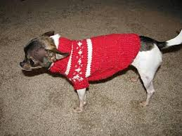 ravelry chihuahua sweater pattern by autumn bates
