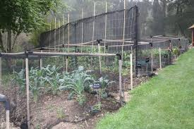 the garden of st erth bluetongue greenthumb