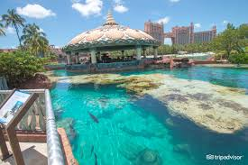 coral towers at atlantis paradise island 2018 hotel review