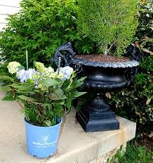 Gardening Tips For Summer - planting hydrangeas for summer color the graphics fairy