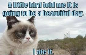 Image 9 Best Grumpy Cat - funny grumpy cat images pictures photos quotes and funny page 9
