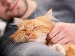 immunschwäche fiv leben mit immunschwäche bei katzen