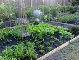 vegetable garden pictures p 5