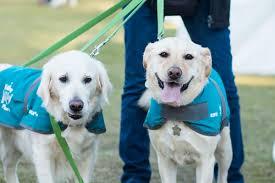 20 Great Dog Walks Around Sydney And Central Coast Australian Rspca Million Paws Walk 2017 May 21 Australian Dog Lover