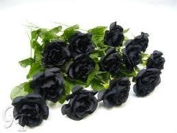 Black Rose Flower Black Roses Amazon Co Uk