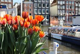 flower garden in amsterdam tulip time the netherlands expat explore travel