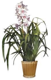 Orchid Plants Westland Orchids Inc Business Center In Carpinteria Ca Usa