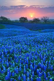 50 most pinned awe inspiring travel spots amazing places texas
