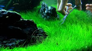 Japanese Aquascape by Just Aquascaping Flowgrow Aquascaping Tools Preview Youtube
