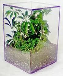 glass plant terrarium ideas