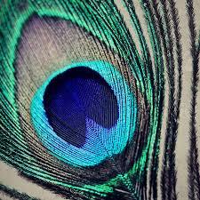 accessories enchanting image of decorative furry macro peacock