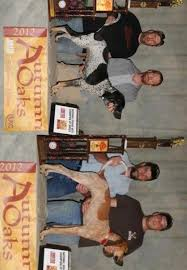 bluetick coonhound owners best in show daily