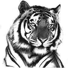 tiger lynn bean enchanting art horses u0026 other amazing