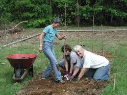 burlington tree keeper program branch out burlington