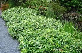 native plants of nz harrisons garden centre waikanae u0026 feilding quality plants