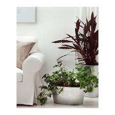 gräslök plant pot ikea