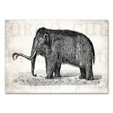 vintage woolly mammoth illustration wooly mammoths business card