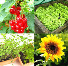 a complete guide to growing vegetables fruit herbs and edible