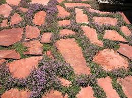 Backyard Ground Cover Options 24 Best Flagstone Groundcover Yards Images On Pinterest Gardens